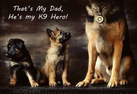 That's my dad, my K9 hero!